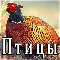 Викторина «Птицы»