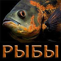 Викторина «Рыбы»